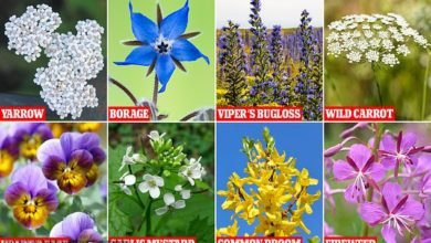 Photo of The 16 'edible' flowers that may be deadly